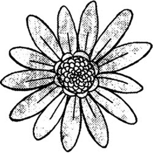 NMC298234