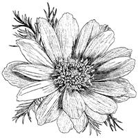 NMC486335
